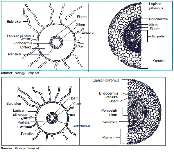 Laporan Praktikum Anatomi Dan Fisiologi Tumbuhan Pdf Document